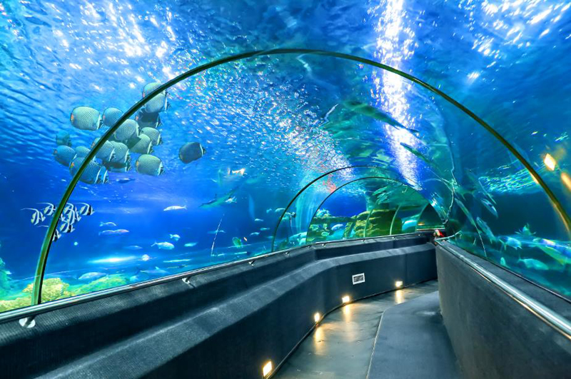 Vinpearl Land Aquarium Nha Trang