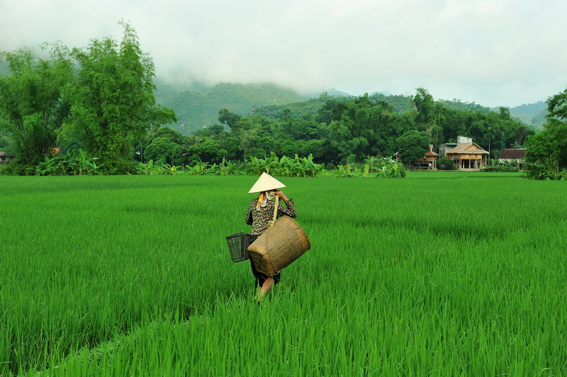 Back to the village - Mai Chau Valley, Hoa Binh, Vietnam