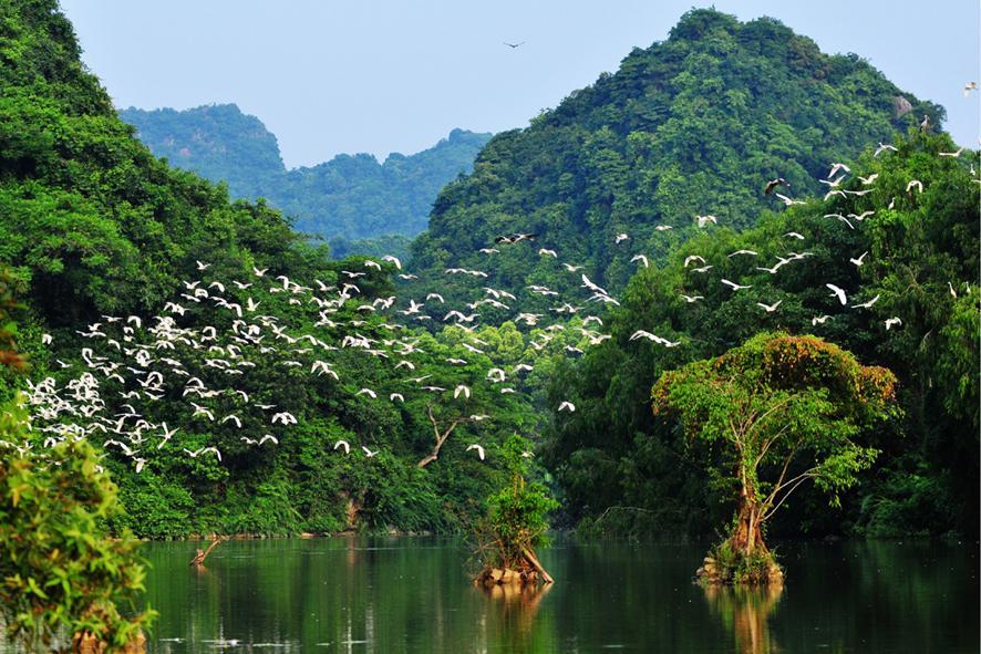 Thung Nham Bird Garden, Ninh Binh, Vietnam