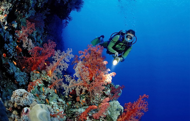 Coral view scuba diving in Phu Quoc