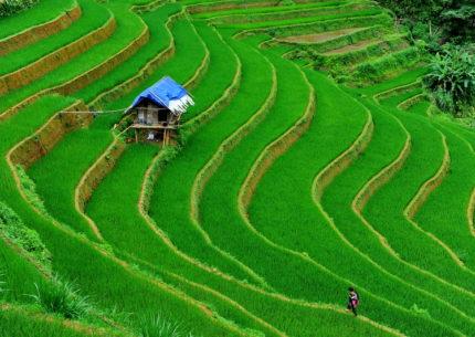 Terraced Ricefields in Sapa, Vietnam