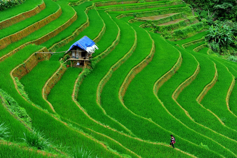 Terraced Ricefields in Sapa, Vietnam