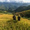 Terraced Rice Fields in Sapa, Vietnam